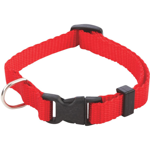Collars, Leashes & Tags